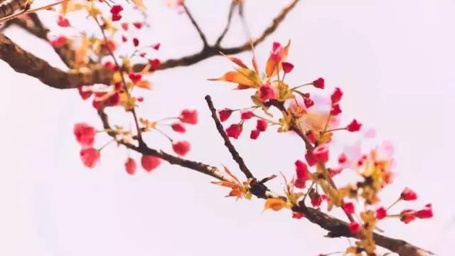 描写春雨轻盈的诗句
