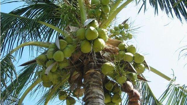 哈尔滨盛产什么水果