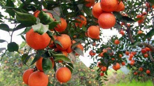 我国现代农业发展存在的主要问题是什么