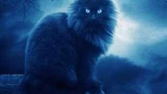夜狸猫事件详细经过