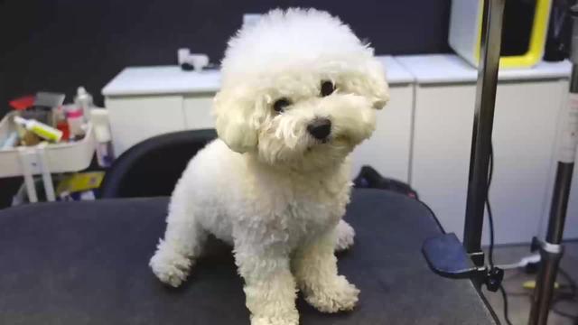怎么帮狗狗剪毛