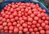 吉林辽宁两省4-5月份哪有大量上市的豆角茄子西红柿产地