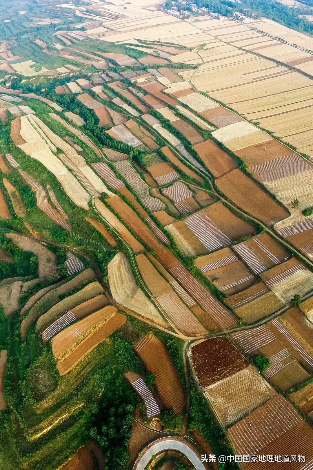 山东、河南、江苏、黑龙江…谁才是中国第一粮仓?
