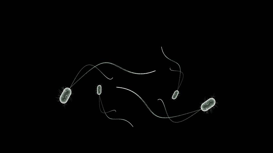 微生物那些事儿:坏病毒坏细菌要提防和洽细菌得好好养着!
