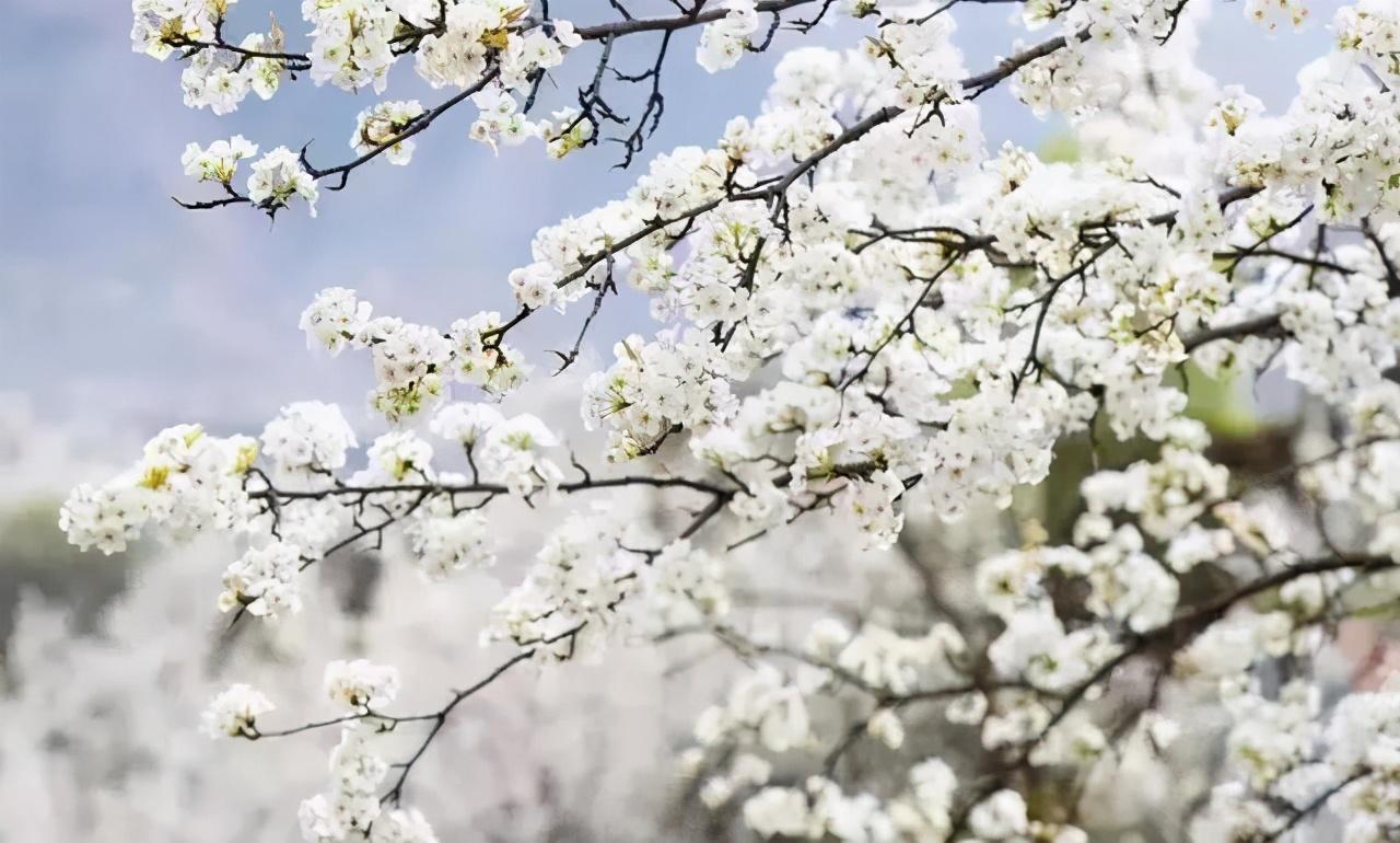 又是一年赏花时!2021全新踏春攻略,11处浪漫花海,安排上