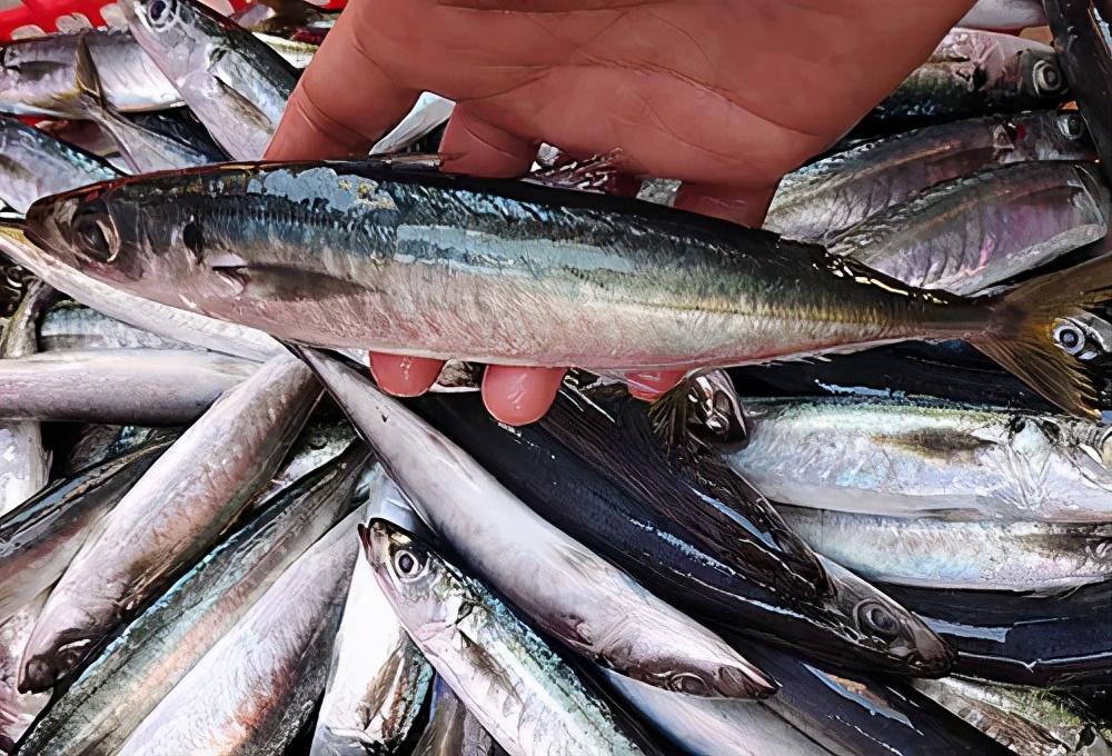 夏天吃鱼,聪明人会挑这6种海鱼,营养高味道好,贵也值得买