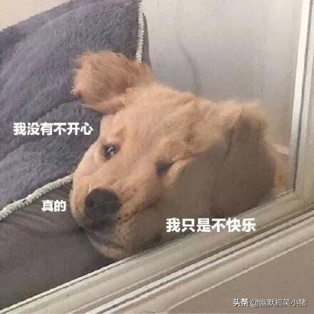 颓废可爱狗狗2
