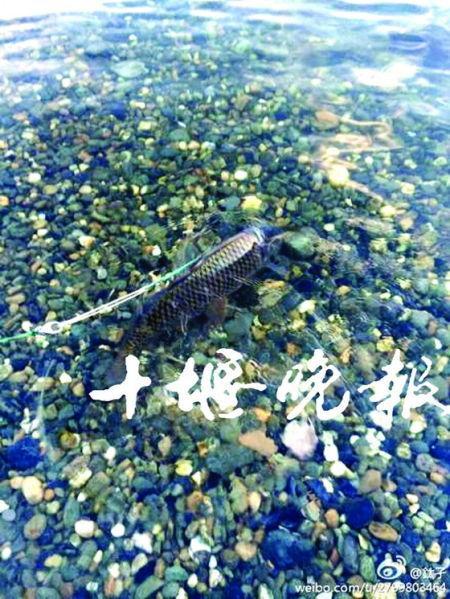 网传十堰钓客水中用绳子遛鱼 实为快速捕鱼法