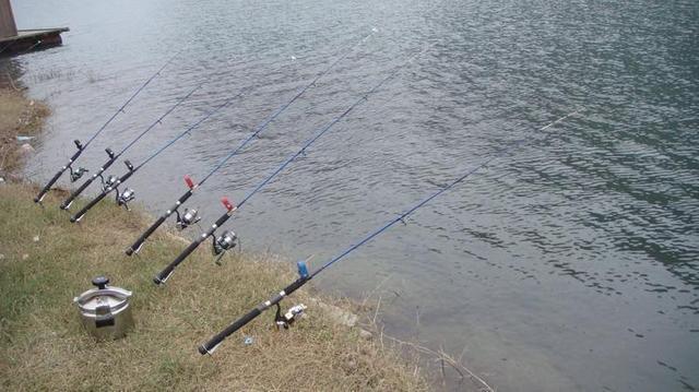 放生的鱼怎么钓