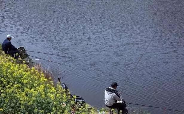 六安钓鱼用什么饵料
