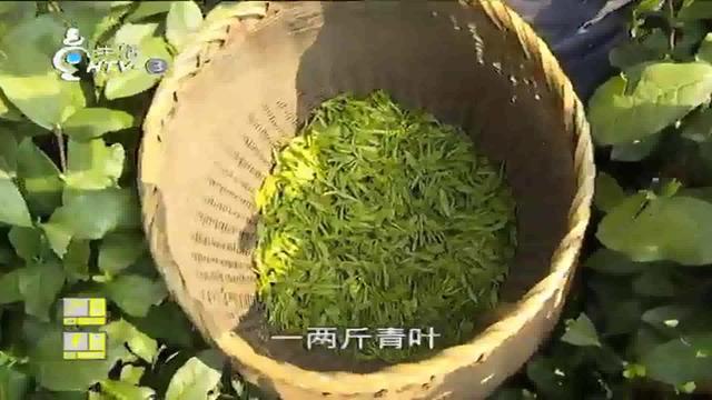 龙井新茶现在多少钱一斤?