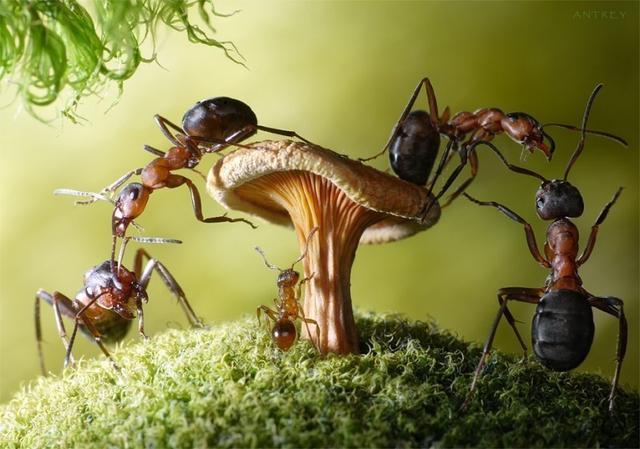 啊我发现蚂蚁也有友谊作文300字