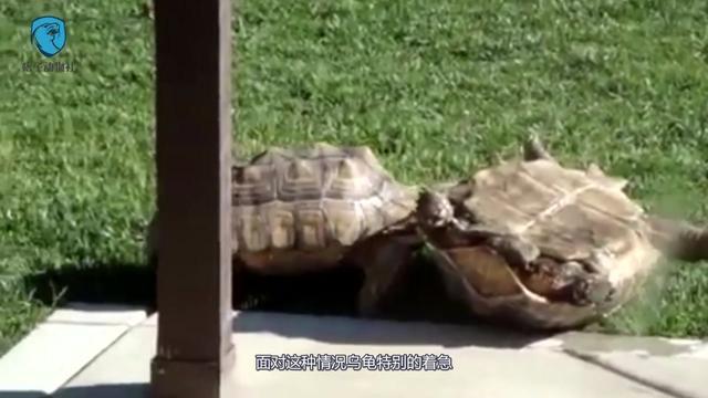 乐于助人的乌龟作文200字