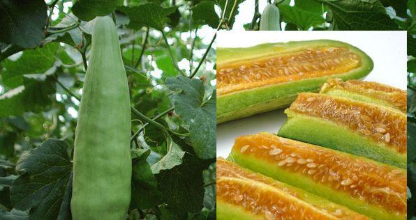 你喜欢吃羊角蜜吗?这种甜瓜怎样种植才能高产