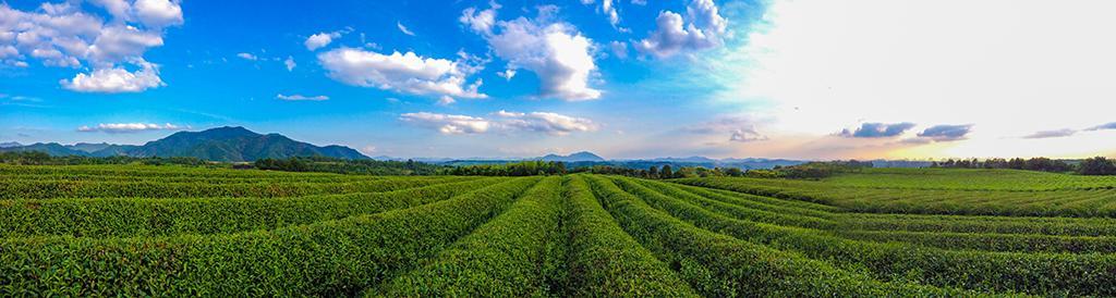 浙江新昌:中国名茶之乡