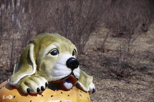 狗狗生产前两三天拉肚子怎么办
