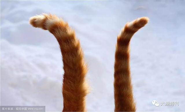 情趣尾巴是怎么用的(真人演示带猫尾巴)