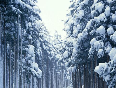 下雪的景色作文200字