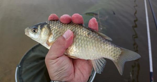 鱼饵的饵料味型怎么搭配比较合适?