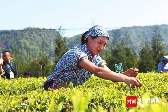 马边茶叶公司