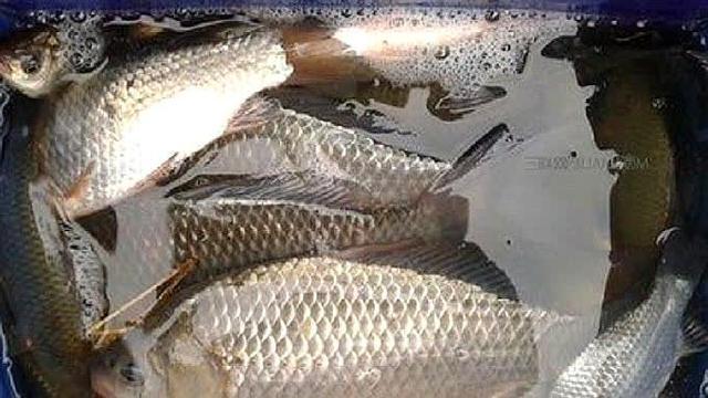 简单又实用的鱼饵怎么配置?