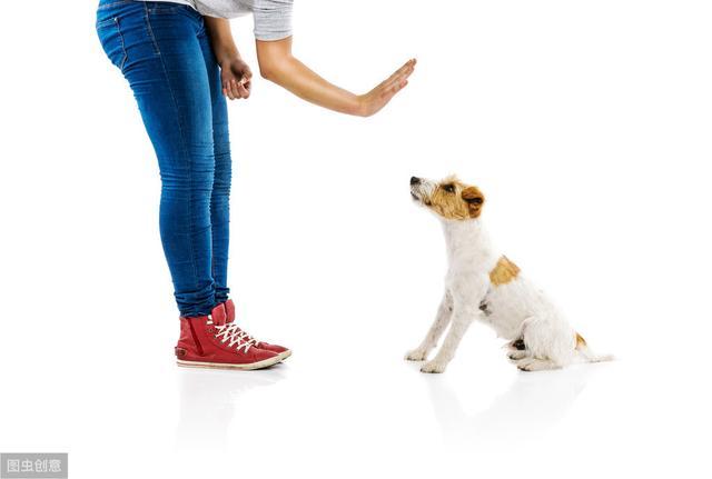什么时候开始训练狗狗最好(如何对狗进行系统的训练)