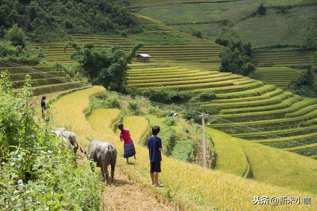 为什么中国农业产业化这么难?注重名头和注重品牌哪个更加重要?
