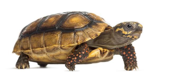 乌龟在冬天要喂食吗