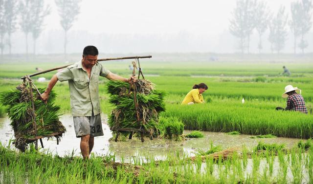 农村的80后小孩,做过的农活难度系数排行,你做过其中的几种?