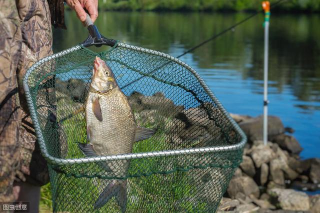 你在底钓鲤鱼,来一钓友在你旁边钓白鲢是什么感觉