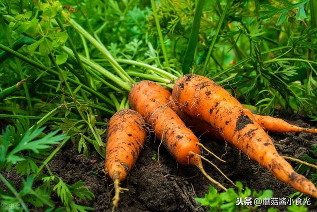 原来选胡萝卜不能看带泥还是不带泥,记住3个窍门,准保选不错