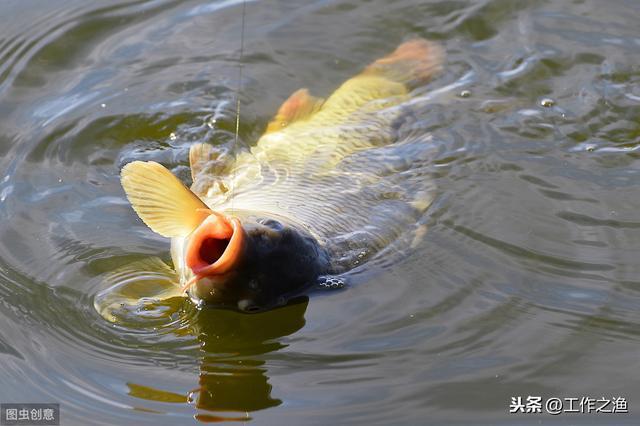 雨水节气能钓鱼吗