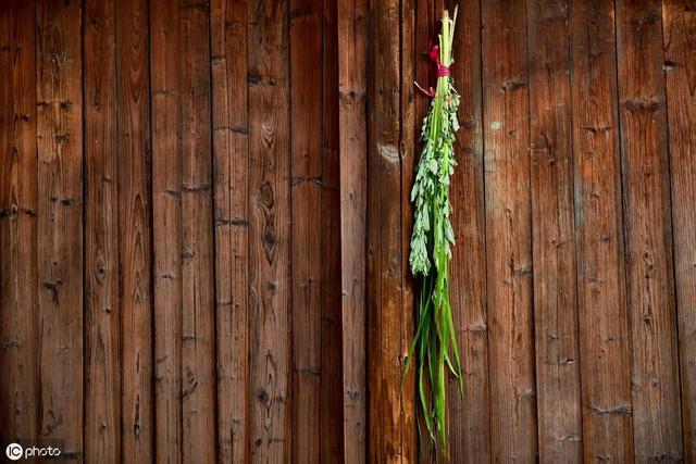 农村端午节挂艾草,你知道应该挂有根还是没根艾草吗?挂的时候根应该朝上还是朝下?