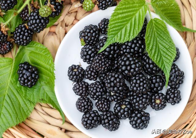 產品個人分享五:祖瑪龍,黑莓與月桂