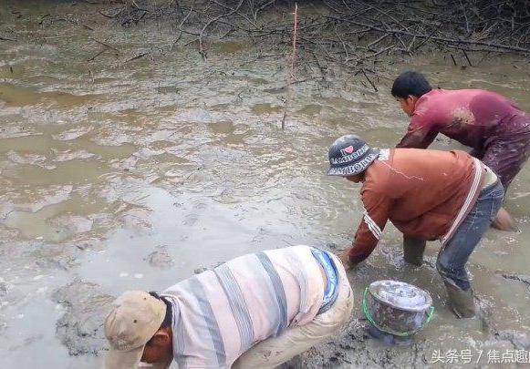 鱼塘很大如何轻松捕鱼?