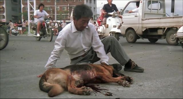 描写人与动物之间的感人故事