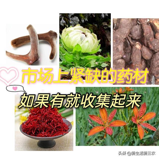 中国三十大紧缺药材哪些适合东北种植