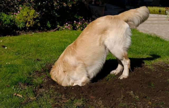 在农村生活,不适合养的7种狗