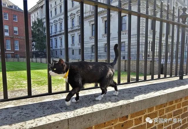 英国外交部官宣:首席捕鼠官光荣退休,将在乡村颐养天年