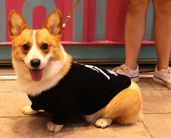狗狗为什么喜欢钻床底下