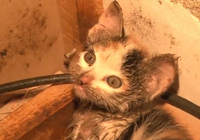 铲屎官用粘鼠板抓老鼠,没想老鼠没抓着,倒是抓了一只小奶猫