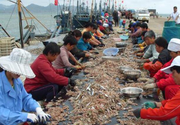 东风期适合海钓吗
