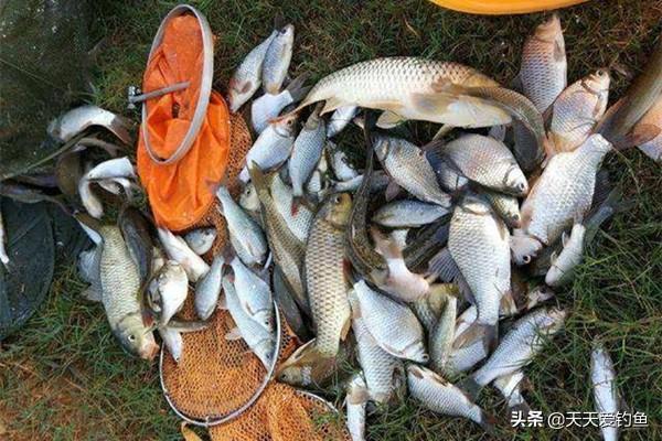 钓鱼人都熟悉三分钓技七分饵料的说法,到底怎样才能正确用饵?