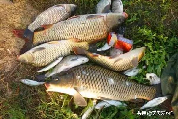 珠珠钩可以钓哪些鱼?