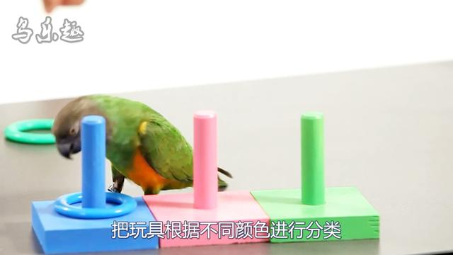 鸟可以看到哪几种颜色