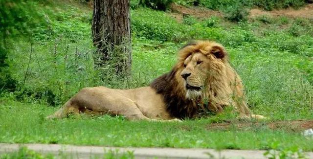 全国动植物园一周游客评价报告出炉!差评率最高的是淹城野生动物世界