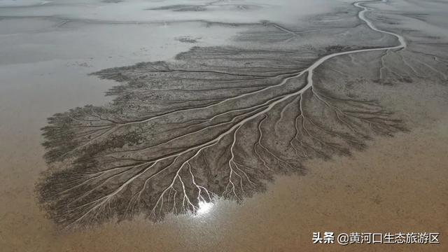 【黄河入海 我们回家】诺贝尔文学奖得主、著名作家莫言来黄河口生态旅游区参观考察