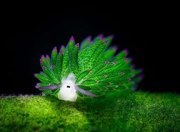 治愈系海洋精灵——叶羊,萌到让人完全忘记烦恼