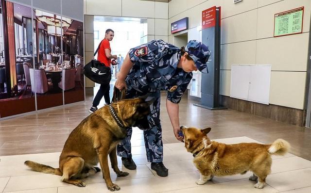 史上最萌警犬退休!俄罗斯短腿柯基当警官,出警全在卖萌?