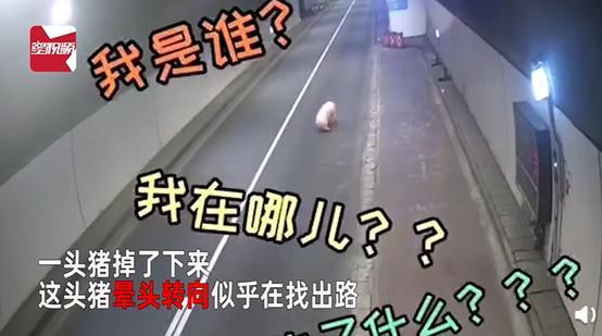 轿车连撞7人,司机已排除酒驾毒驾【三分钟法治新闻全知道】